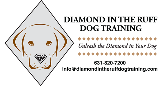 Diamond in the Ruff Dog Training